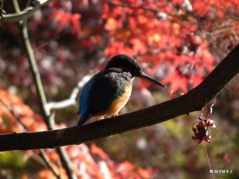 2011121174紅葉と野鳥@薬師池公園