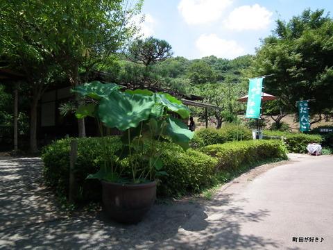 2011071619やくし茶屋近くのハスの花