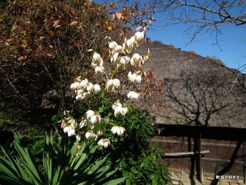 20101204063白い花薬師池公園