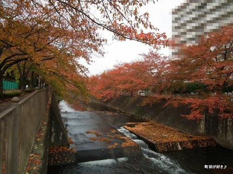 2010111302紅葉の恩田川