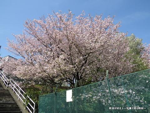 20140412034八重桜(ヤエザクラ)@城山公園(成瀬城跡)