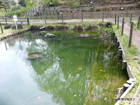 20100418103薬師池公園おたまじゃくし