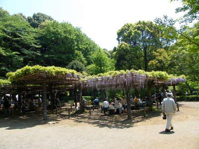 20090429082.jpg 薬師池公園の藤棚