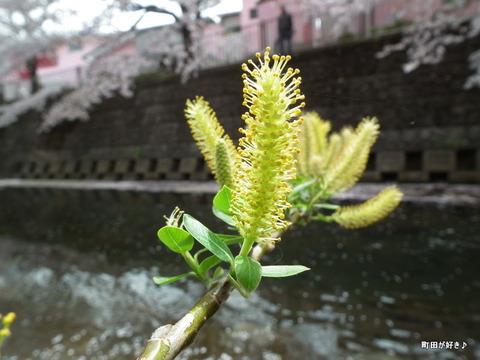 20110410167柳の花