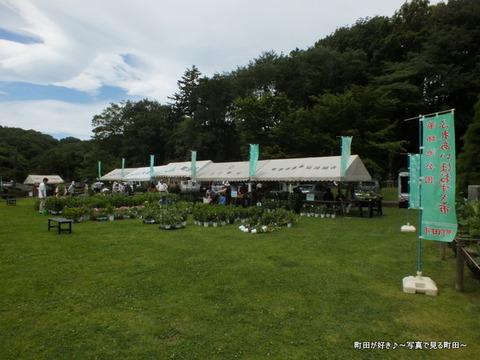 2013070650薬師池公園「ほおずき・あさがお市」