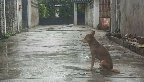 捨てられたことも知らずにその場で1か月間も待ち続ける犬 飼い主は犬を捨てて遠くに引っ越し