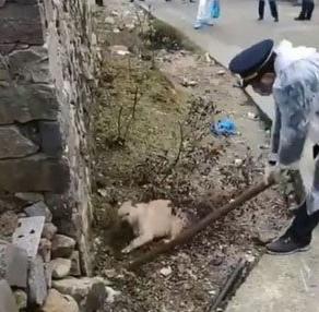 「犬を散歩させないでください。見つけた場合、一律に殴り殺します」と中国の武漢でアナウンスが流れる・・・