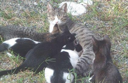 野良猫家族7匹写真