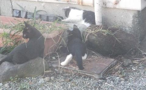 庭に住み着き始めた野良猫家族