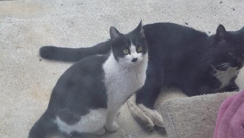 野良猫家族の祖父猫写真