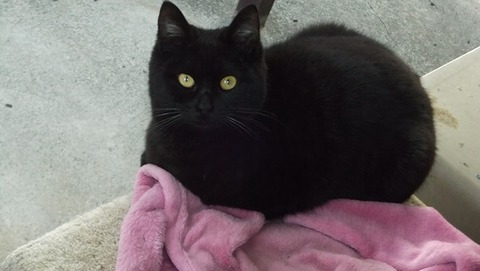 庭の地域猫家族の黒猫写真