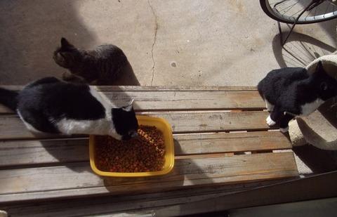 庭の野良猫家族 (4)