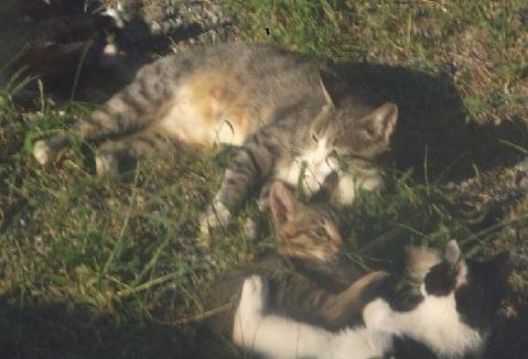 9野良猫家族7匹写真 (18)