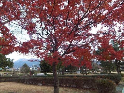 26御殿場市で紅葉狩りと富士山写真 (7)