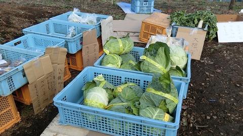 年末年始の無人販売所で野菜 2019(3)