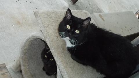 庭の地域猫の黒白猫の祖父と息子の父親猫