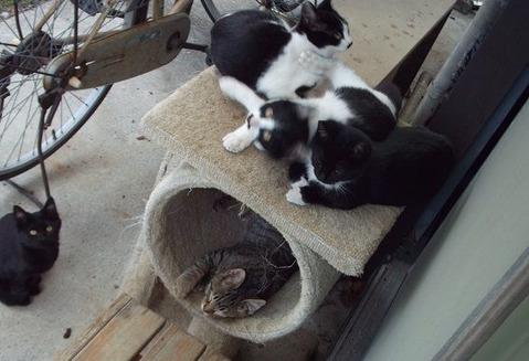 庭の野良猫家族たちの写真 (5)