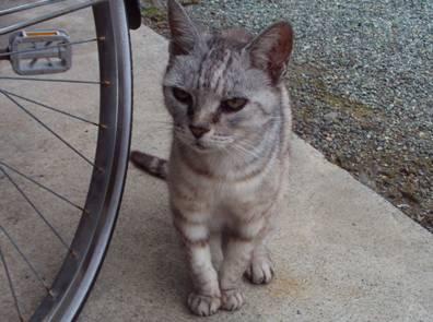 家庭菜園をいじる俺を眺めるペットのような地域猫をデジカメ撮影
