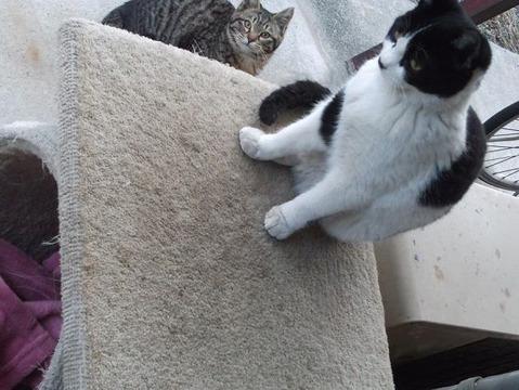 庭の地域猫家族 (6)