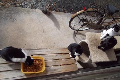 19庭の野良猫兄弟