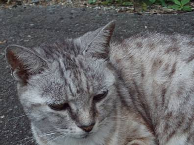 地域猫が何だね君たち人間は食料を取るのに大変だねと言わんばかりの地域猫の態度