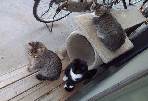 庭の野良猫家族たちの写真 (6)