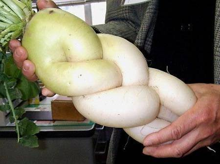 リンクの爆笑画像からのおもしろい形の野菜の大根画像