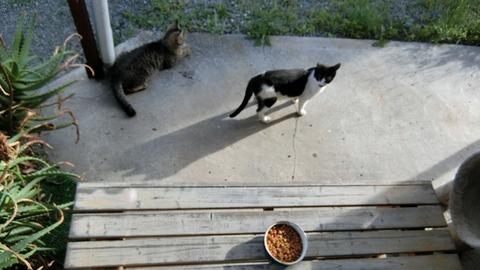 地域猫達へ引越し前のエサあげる