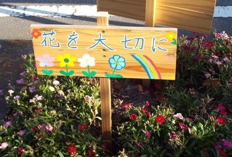 寒風に咲く強き花たち