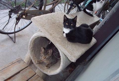 11庭の野良猫家族たちの写真 (1)