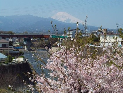 14桜と富士山と川 (2)