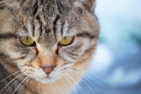 かっこいい猫の画像