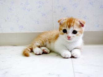 虐待されたネコ を