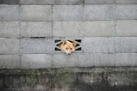 【逆襲】私有地に塀を