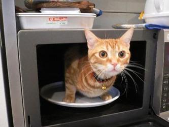 】猫をレンジに入れ