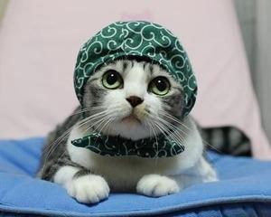 「この女が夫を奪った!この泥棒猫。