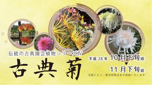2016古典菊展バナー1920-1080