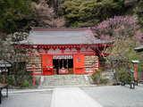 紅白の梅が咲く/荏柄天神社