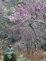 東慶寺ウメ050116