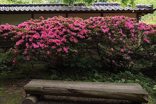 170608浄智寺サツキ