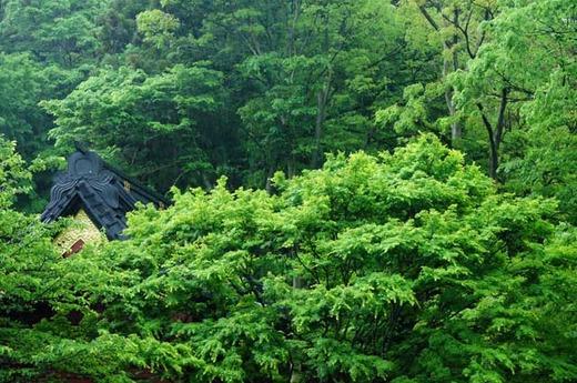 120515妙本寺新緑2