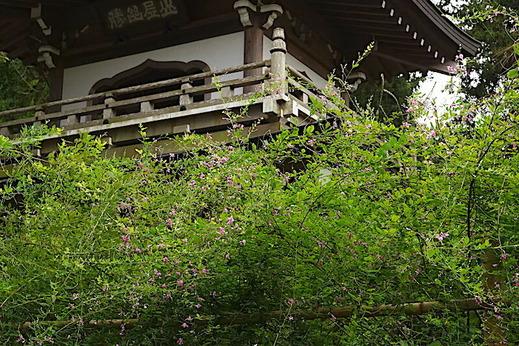 200914浄智寺ハギ