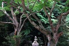 180502妙本寺新緑5