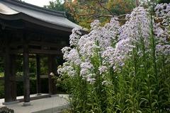 101016海蔵寺シオン