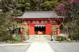 080216荏柄神社ウメ2