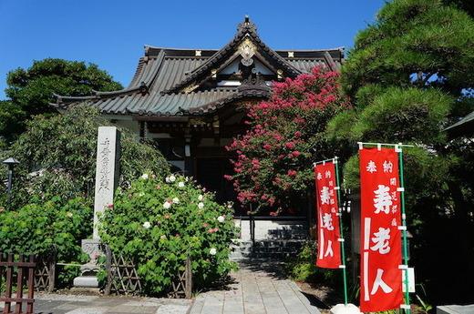 150827妙隆寺サルスベリ1