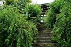 150813海蔵寺ハギ