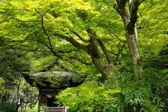150412円覚寺新緑4