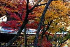 131202円覚寺紅葉