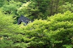 160427妙本寺新緑2